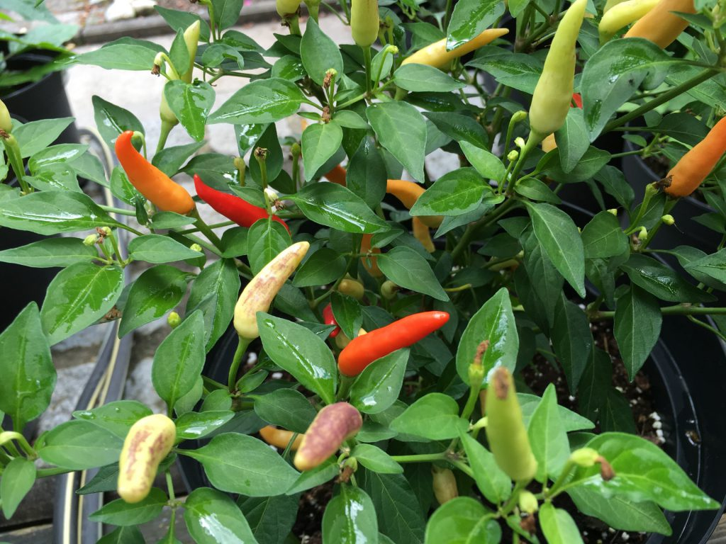 Basket of Fire Chili