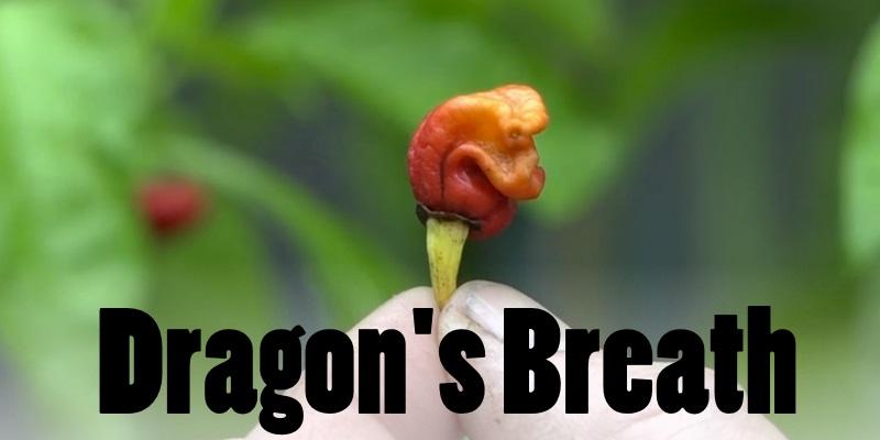 Dragon's Breath Chili